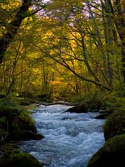 Oirase Keiryu (jun*sawase) Tags: autumn   em5 mzd45