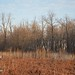 "Illinois Hunting Land for Sale • <a style=""font-size:0.8em;"" href=""http://www.flickr.com/photos/66358149@N06/8427457955/"" target=""_blank"">View on Flickr</a>"