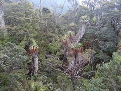 Flora & Fauna (Christine Amherd) Tags: creativity australia tasmania australien ine passionate nelsonfalls tasmanien tassi mypassion cradlemountainnp lakesaintclairnp franklingordonwildriversnp christinescreativityphotography christinesphotography
