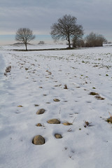 Sleeping Nature (Nicolas Gailland) Tags: winter white snow france alps tree nature alpes grenoble canon landscape countryside seasons fields isere isre paladru virieu