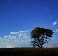 Lonely tree (jeremy.southwick) Tags: astro astrophotography sunset stars trees