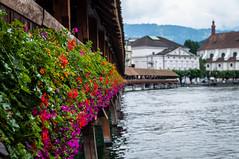 Kapellbrcke  - Lucerne (Lars_Pistasj) Tags: lucerne sveits switzerland bridge flower alps kapellbrcke bro altstadt pentax k7 ricoh