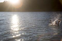 Splash, Kakskerta, Turku, Finland (Steve Weaver) Tags: finland summer kesa suomi sea kakskerta turku island splash spray sun glint glinting water mari woman swim swimming