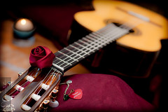 String of the heart (Madija~) Tags: musical instrument guitar guitarra instrumento msica romantica amor flor rosa rose flamenco strings frets spanish romance love     hafez guitarlove