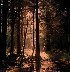 Light in the Forest (PeskyMesky) Tags: aberdeen forest tree trees sun lowsun shadow scotland sunrise sunset canon canoneos500d