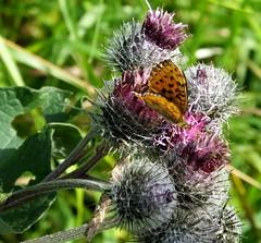 Hiking at Vuosaarenhuippu area (Lalallallala) Tags: suomi finland outdoors helsinki vuosaari vuosaarenhuippu butterfly