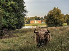 Highland Cow at Avington Park, Hampshire (neilalderney123) Tags: 2016neilhoward winchester cow coo highlandcow highlandcoo avington avingtonhouse landscape olympus