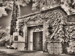 Fonda San Miguel (Richard Denney) Tags: fondasanmiguel blackandwhite infrared austin cactus