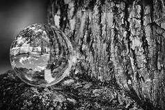 (Px4u by Team Cu29) Tags: glaskugel allee baum spiegelung rinde park oberschleisheim