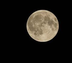 Moon, Harvest (Jeanni) Tags: moon harvest full fullmoon harvestmoon astrophotography nightsky circle blackbackground round texture minimalism canon tamron remote