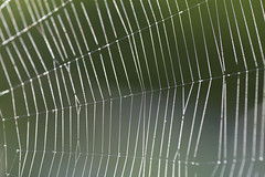 Morning light (KevPBur) Tags: bokeh canon650d canonkissx6i canonrebelt4i canon70200mmf28lisiiusm canonextenderef14xiii polaroid500dcloseuplens bejewelled cobweb lines sparkle spidersweb canon650dcanonkissx6icanonrebelt4i