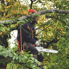 Deforestation (Amelia Bramwell) Tags: life plant man tree male nature model documentary chainsaw human impact environment deforestation