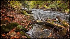 Beaverdams Creek (Mustang Joe) Tags: autumn ontario water creek lumix panasonic stcatharines dmc lx7 beaverdams panasoniclumixdmclx7