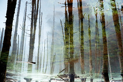 (Jersey Yen) Tags: reflection green film water forest foggy taiwan leicacl