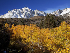 Autumn and Winter Meet in the E. Sierra (DM Weber) Tags: california autumn snow mountains fall canon landscape sierra aspen eastern snowcovered eos5dmk2 psa148 dmweber