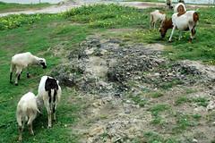 Cape Coast (MadisonBoratto) Tags: ocean africa hotel coast guinea gulf goat oasis ghana cape operation groundswell