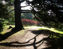 Shadows at Chatsworth House Gardens (Tony Worrall Foto) Tags: pictures uk autumn wild england tree fall nature beauty outside shadows natural path branches derbyshire seasonal scenic sunny serene tall sunlit autumnal chatsworth seson chatsworthhousegardens 2012tonyworrall