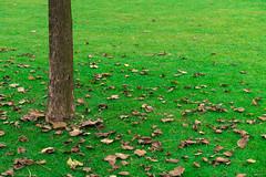 Mess (Daniel Kulinski) Tags: autumn tree fall photography leaf europe image daniel creative picture samsung poland warsaw blade 60mm 1977 photograhy nx nx20 samsungnx samsungimaging danielkulinski samsungnx60mmf28 samsungnx20 samsung60mm
