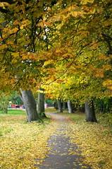 Autumn (kh1234567890) Tags: uk autumn trees england manchester 50mm pentax bokeh path beech horsechestnut fallowfield plattfields k7 smcpentaxm50mmf14 smcpm50mmf14