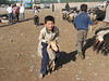 Kashgar animal market in Xinjiang, China (mbphillips) Tags: xinjiang 新疆 中国 west 中國 شىنجاڭ kashgar 喀什 قەشقەر fareast asia アジア 아시아 亚洲 亞洲 china 중국 mbphillips canonixus400 market 市場 市场 시장 mercado geotagged photojournalism photojournalist