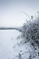 Frozen Hedge (Dylan Farrow) Tags: uk blue winter white snow cold wales frozen december website hedge added