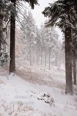 Winter Wald am Fichtelberg (Thomas_S.) Tags: schnee winter natur wiese himmel braun ste landschaft wald bltter baum impression baumstamm