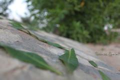 فلسفة شجرة (Tahani AL-Tamimi) Tags: من على ان مثل الشجر عندما الصغير تريد لابد الخطوات الكبيرة السير تزدهر كيتجني