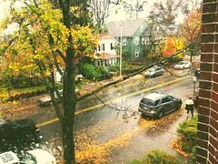 Cambridge (pre-Hurricane Sandy) (mlee525) Tags: autumn cambridge leaves boston vscocam hurricanesandy