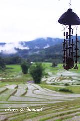 PhamonVillage-DoiInthanon-ChiangMai-Trip_By-P r i m t a a_E10886166-013