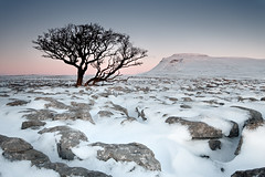 white snow landscape photographer yorkshire year scar dales hawthorn 2012 ingleborough limestonepavement landscapephotographeroftheyear lpoty