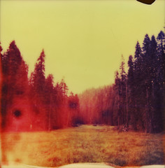 (Megan Brim) Tags: project polaroid impossible px680