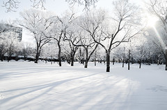 Paint it White (Harry2010) Tags: winter snow canada tree frozen victoriapark frost regina saskatchewan hoar