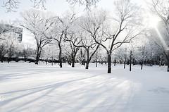 Paint it White (Harry2010) Tags: winter snow canada tree frozen victoriapark frost regina saskatchewan hoar