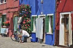 Arreglando la bicicleta, Isla de Burano, Italia (Vicente A. Roa) Tags: venice italy bike rose streetphotography burano roa travelphotography nikond90 vicentearoa vicenteroa
