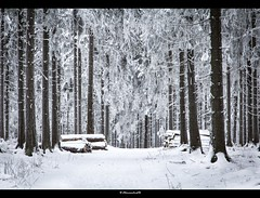 through the frosty forest (bernd obervossbeck) Tags: schnee winter snow forest frost path hoarfrost wald raureif weg frostig sauerland whitefrost hochsauerland canoneos60d mygearandme mygearandmepremium