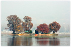 Char Chinar - colour of Harud (Monsoon Lover) Tags: life autumn india love nature flickr politics story kashmir srinagar dallake explored caughtinthecrossfire photowithstory charchinar sudipguharay microstory autumninkashmir viewfromhazratbal bothsideofthestory