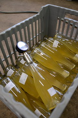Secondary bottle fermentation (Jacob Damgaard) Tags: apple wine bottles champagne cider sugar danish apples bottling applewine