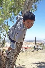 boy in tree (Pejasar) Tags: boy child tree climb tijuana mexico