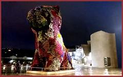 Bilbao (steve 99) Tags: sculpture art puppy spain bilbao guggenheim euskadi basquecountry jeffkoons guggenheimmuseum