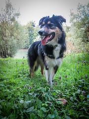 9 mois aujourd'hui ... (K r y s) Tags: lisca alert basenautique extérieur nature outdoor patrol posing