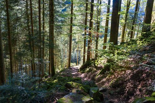 Forêt de Bad Rippoldsau
