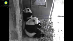 2016_08-02zm (gkoo19681) Tags: beibei meixiang treattime yummyapple evilcarrot stealing badmama ccncby nationalzoo