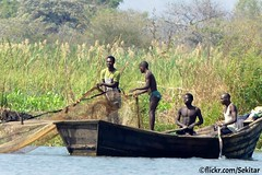 Fishing, Shire River, Liwonde, Malawi (Sekitar) Tags: malawi eastafrica afrique africa east fishing shire river liwonde boat man work