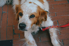DSC_1376 (Daphne Wolfsong) Tags: dog dogs animals domesticatedanimals pet pets cute sweet nature indie retro vintage pale photography