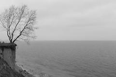 Brodtener Ufer (difridi) Tags: ostsee balticsea blackandwhite schwarzweiss monochrome norddeutschland landscape landschaft baum tree steilkste natur nature schleswigholstein travemnde difridi