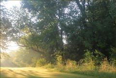 Morning (moodyfan (Julie)) Tags: morning light tones trees sun