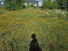 188 (en-ri) Tags: prato fiorellini sony sonysti giallo verde