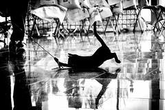 we play II (Leo a Mia) Tags: cat black white kitty play