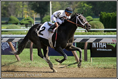 Unbridled Eagle breaks his maiden (Spruceton Spook) Tags: saratoga horseracing horses maidens