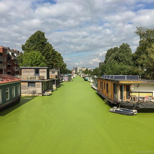 Groene grachten in Groningen